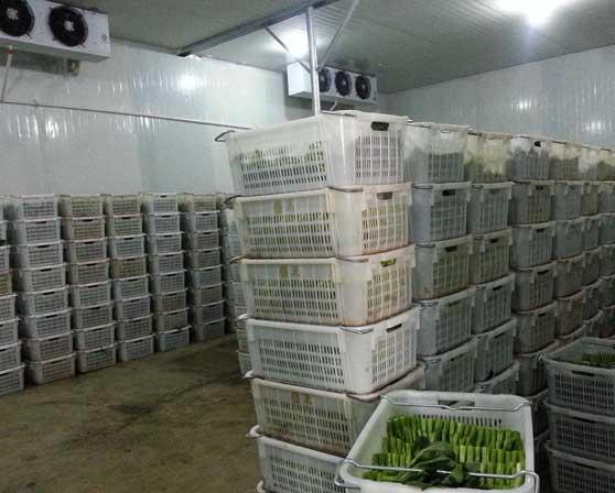 重慶蔬菜冷庫